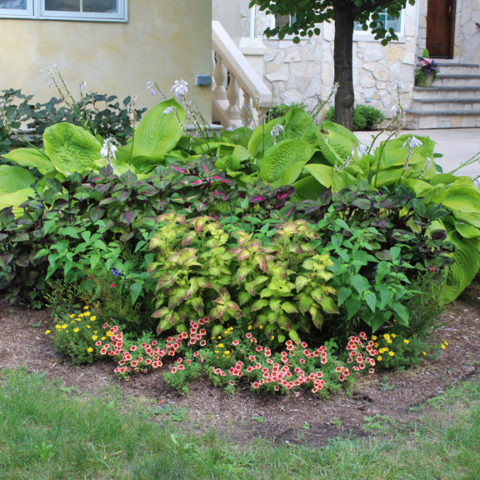 Coleus and full sun annuals trim the outskirts of this perennial shade garden