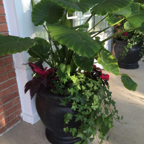 Deep shade container using tropicals for a dramatic display