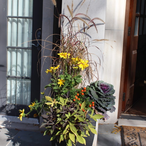 Kale, rudbeckia and jerusalem cherry are added to this summer container of annual grasses