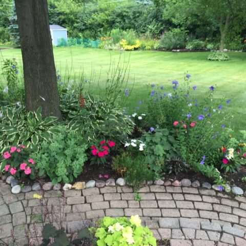 Colorful shade annuals accent this dry shade garden