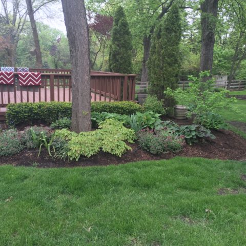 Dry shade perennial garden with texture and color variations and bloom rotation