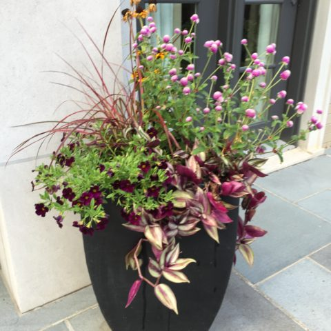 Deep shade container using tropical plants for a dramatic display